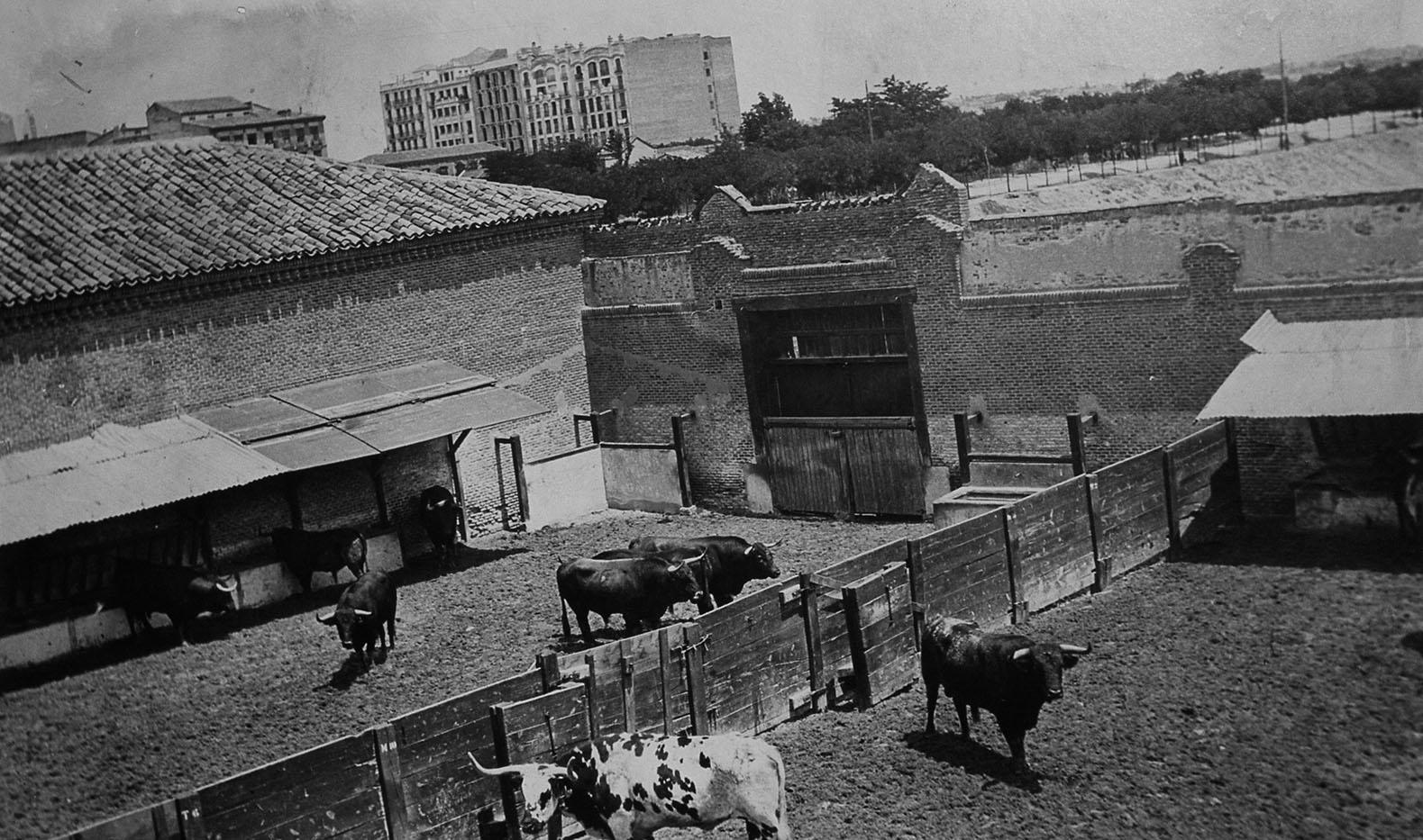 La foto de la semana: Toros en la Avenida Felipe II