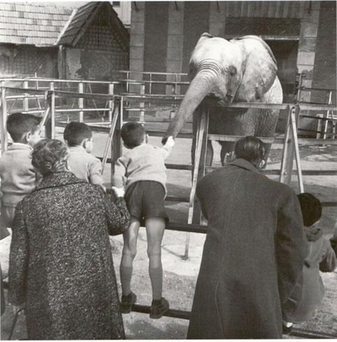 Foto de la semana: Casa de Fieras. Elefantes. 1960